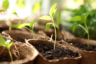 Relieving Stress and Improving Your Health in the Garden